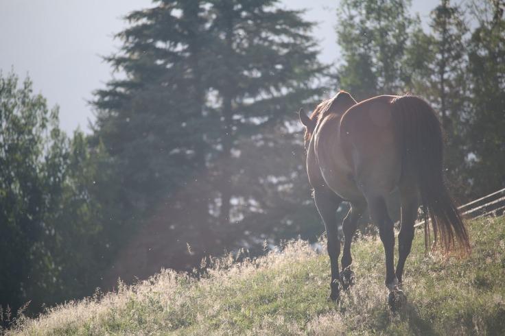 horses-1150017_1280