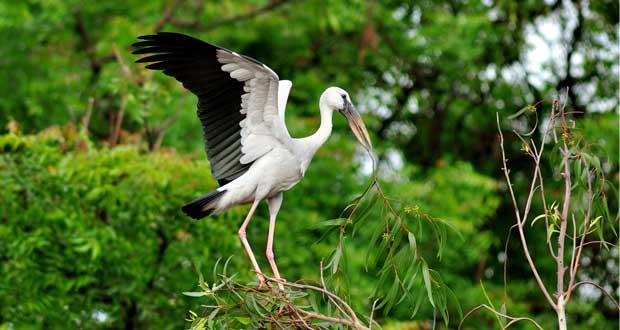 kumarakom-bird-santury