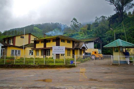 tea-museum